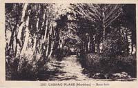 carte postale de Carnac 139