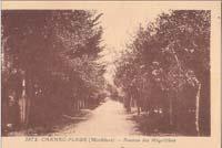 carte postale de Carnac 211