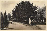 carte postale de Carnac 292