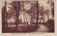 carte postale de Carnac 310