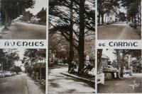 carte postale de Carnac 321