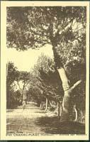 carte postale de Carnac 185